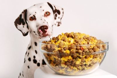 Choosing the Best Dry Dog Food - Tips For Dog Owners